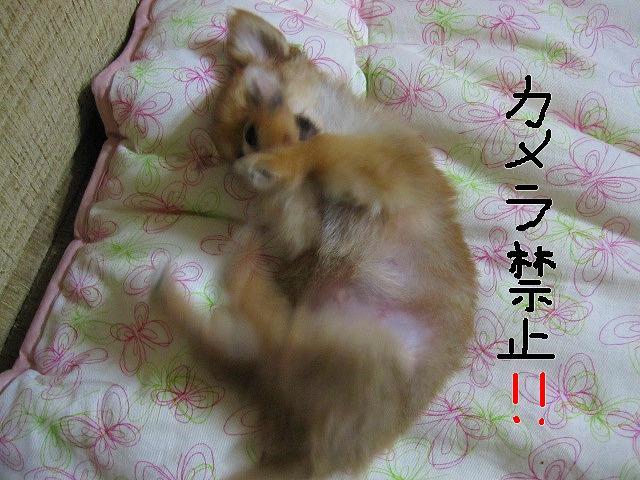 snap_06mint14_20098013221.jpg