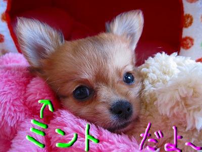 snap_06mint14_20098022547.jpg