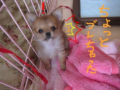 snap_06mint14_200980232234.jpg