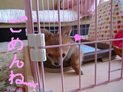 snap_06mint14_2009830821.jpg