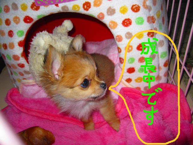 snap_06mint14_2009840188.jpg