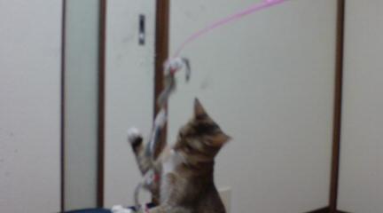 猫じゃらし (8)