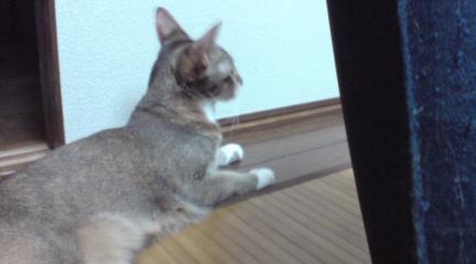 猫じゃらし (6)