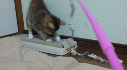 猫じゃらし (3)