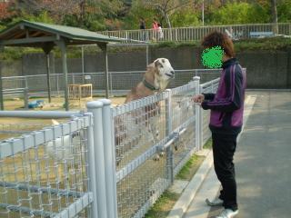 動物園 (13)