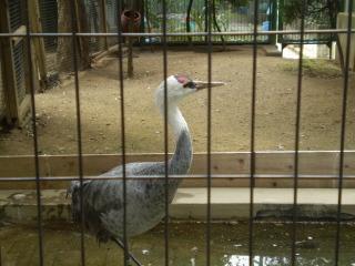動物園 (6)