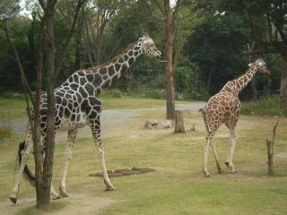 動物園 (8)