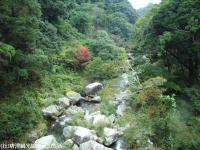 見帰りの滝あじさい橋(2008.11.6)