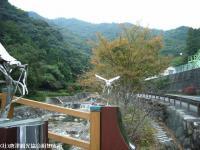 見帰りの滝ほたる橋(2008.11.6)②
