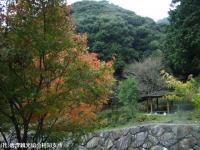 見帰りの滝ほたる橋(2008.11.6)③