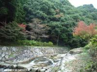 見帰りの滝ほたる橋(2008.11.6)④