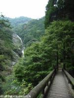 見帰りの滝もみじ橋(2008.11.6)