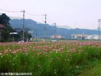 yamasaki2008101102.jpg