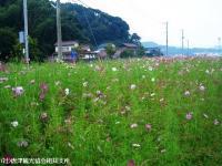 yamasaki2008101106.jpg