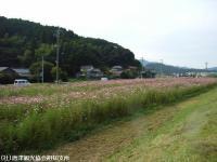 yamasaki2008101403.jpg