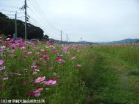 yamasaki2008101404.jpg