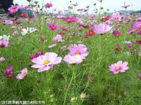 yamasaki2008101405.jpg