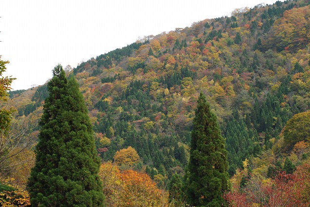 岩井滝登山口からの眺め