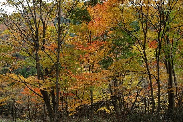 渓谷の紅葉1