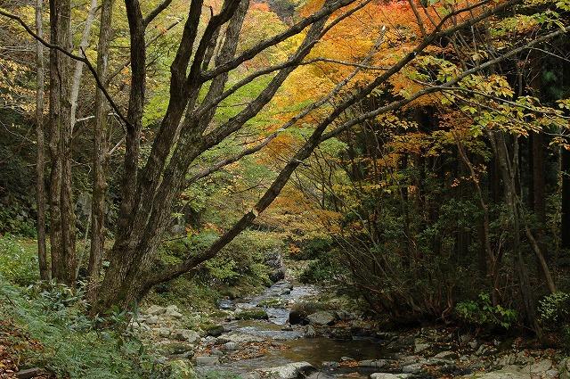 渓谷の紅葉3