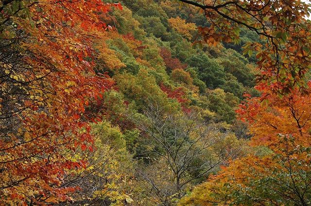 山の紅葉1