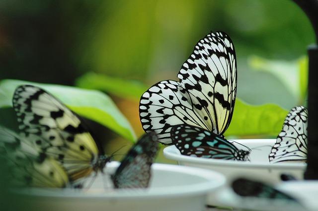 蝶の食事2