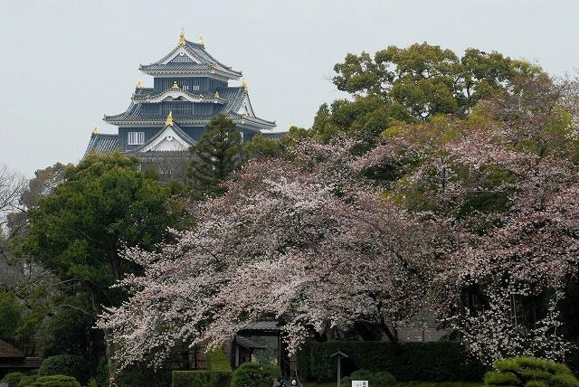 後楽園の桜1-2