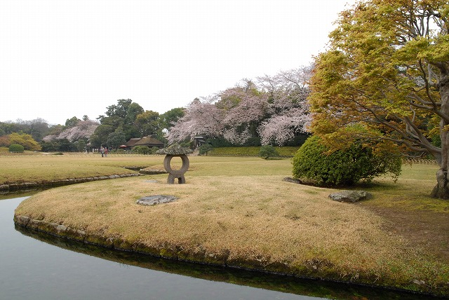 後楽園の桜1-4