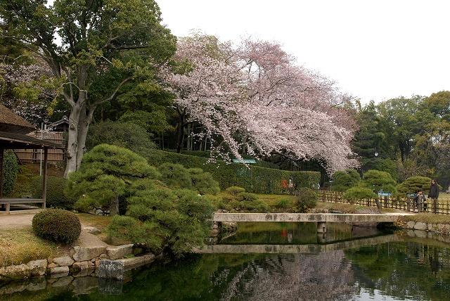 後楽園の桜10