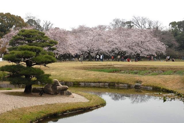 後楽園の桜14