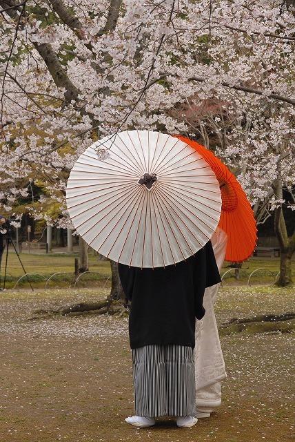後楽園の桜20
