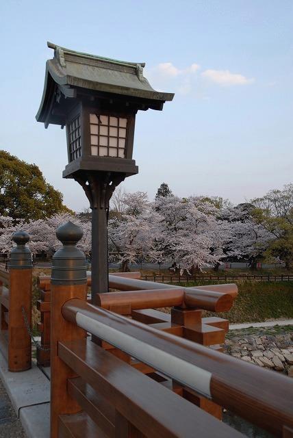 旭川の土手の桜20