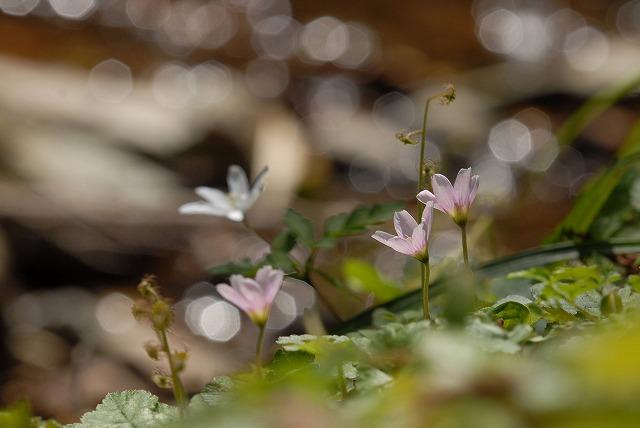水辺の花1