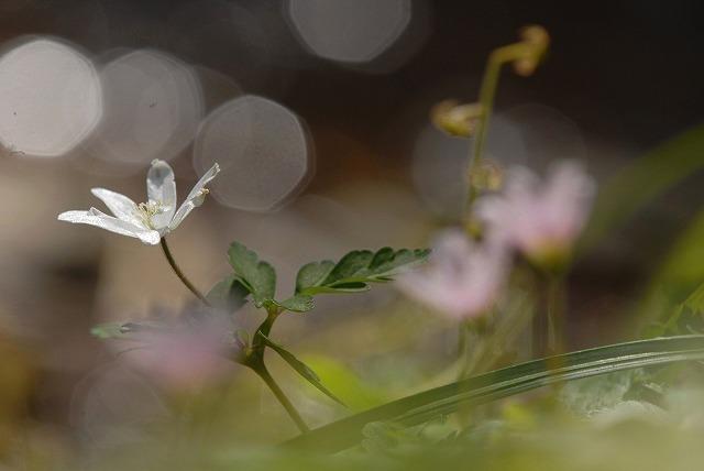 水辺の花2