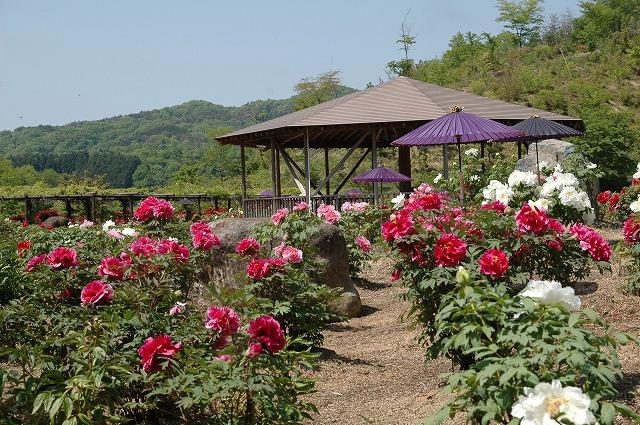 美咲花山公園5