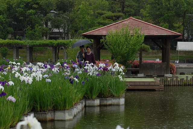 あやめ池公園14