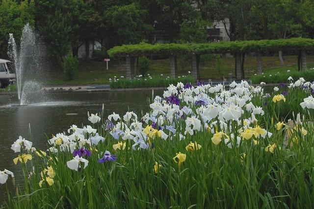 あやめ池公園15
