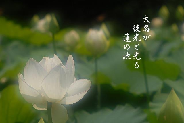 大名蓮10