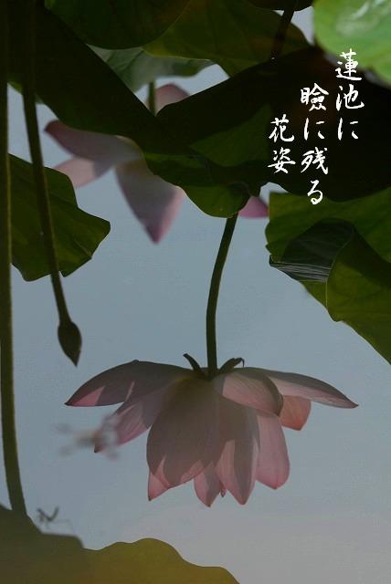 宗治蓮20