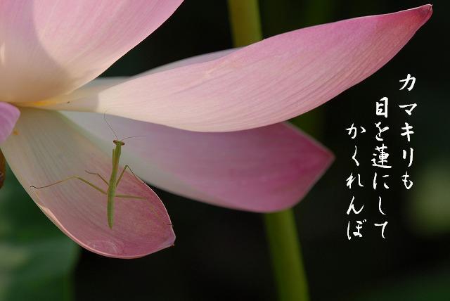 宗治蓮22