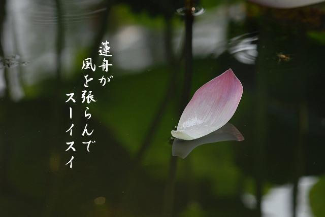 宗治蓮27