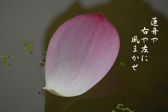 宮地安らぎの里の蓮21
