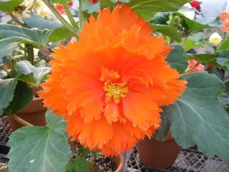 初秋の花たち 2