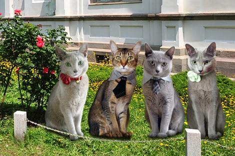 訪問猫企画2