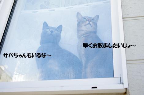 2011030903.jpg