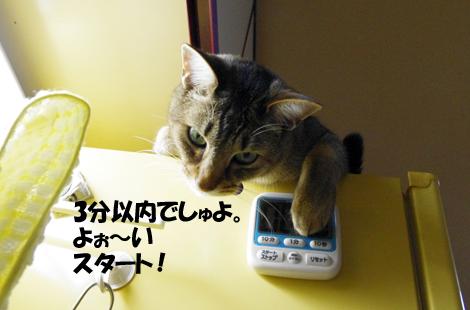 2011031005.jpg
