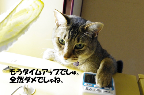 2011031006.jpg