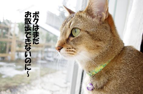 2011031204.jpg
