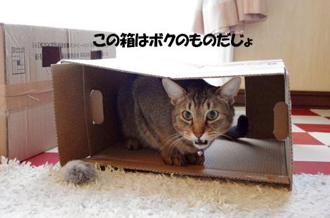 2011031504.jpg