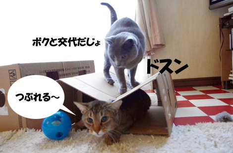 20110315103.jpg